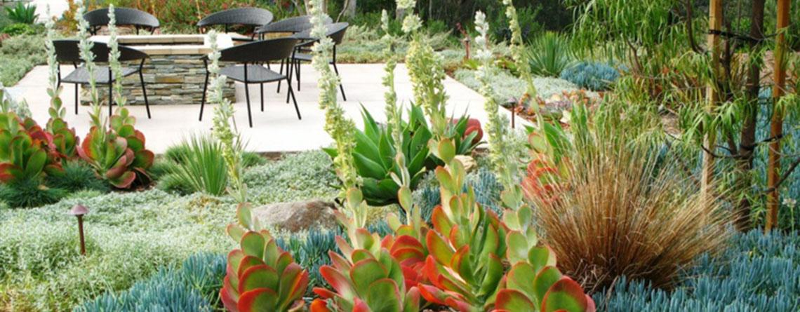 plantas-suculentas-vonvang